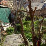 giardino (4)