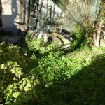 giardino (5)