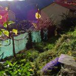 giardino (8)